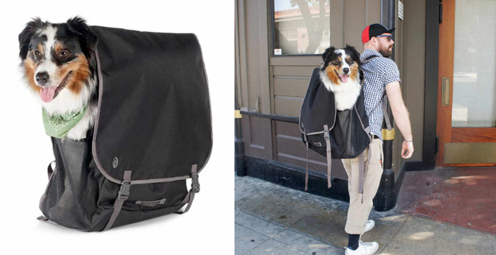Until Your Dog Learns How To Ride A Bike This Timbuk2